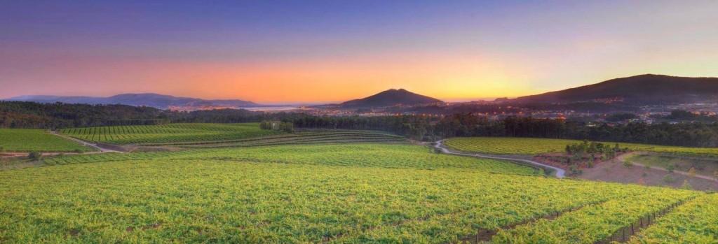 Asesoramiento en proyectos de turismo del vino